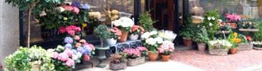 Negozio di fiori e piante